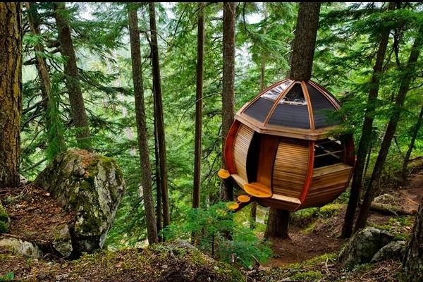 خانه های درختی کانادا,جاذبه های طبیعی کانادا,سفر به کانادا,طبیعت گردی در کانادا,جنگل های کانادا,خانه درختی فری اسپریت کانادا